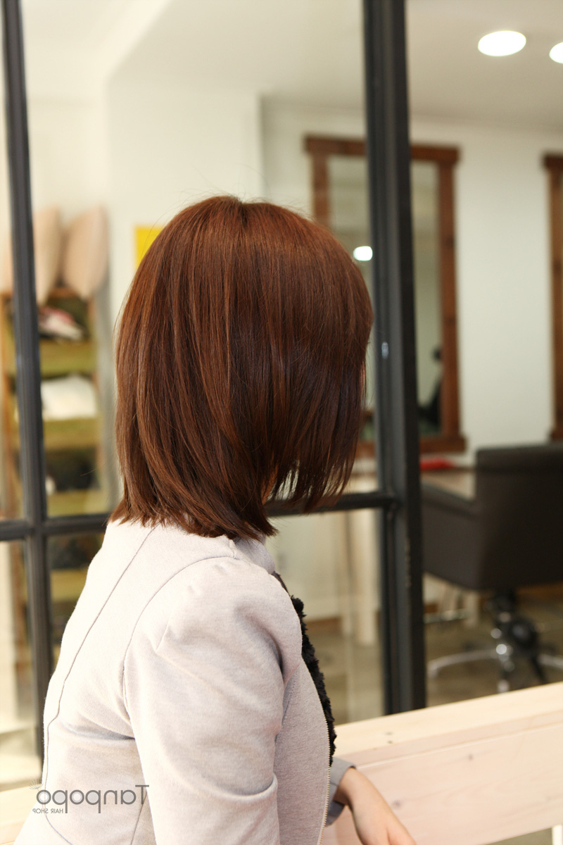 Short Bobs Hairstyles — The Brown Dog : Short Bob Hairstyles Korean Inside Korean Short Bob Hairstyles (View 14 of 25)