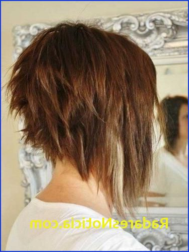 Short Back Long Front Haircuts 15 Best Collection Of Hairstyles Long Inside Long Front Short Back Hairstyles (View 24 of 25)
