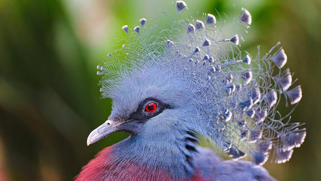 15 Birds With Snazzier Hairdos Than You | Mnn – Mother For Mohawk Haircuts With Curls For A Feathered Bird (View 11 of 25)