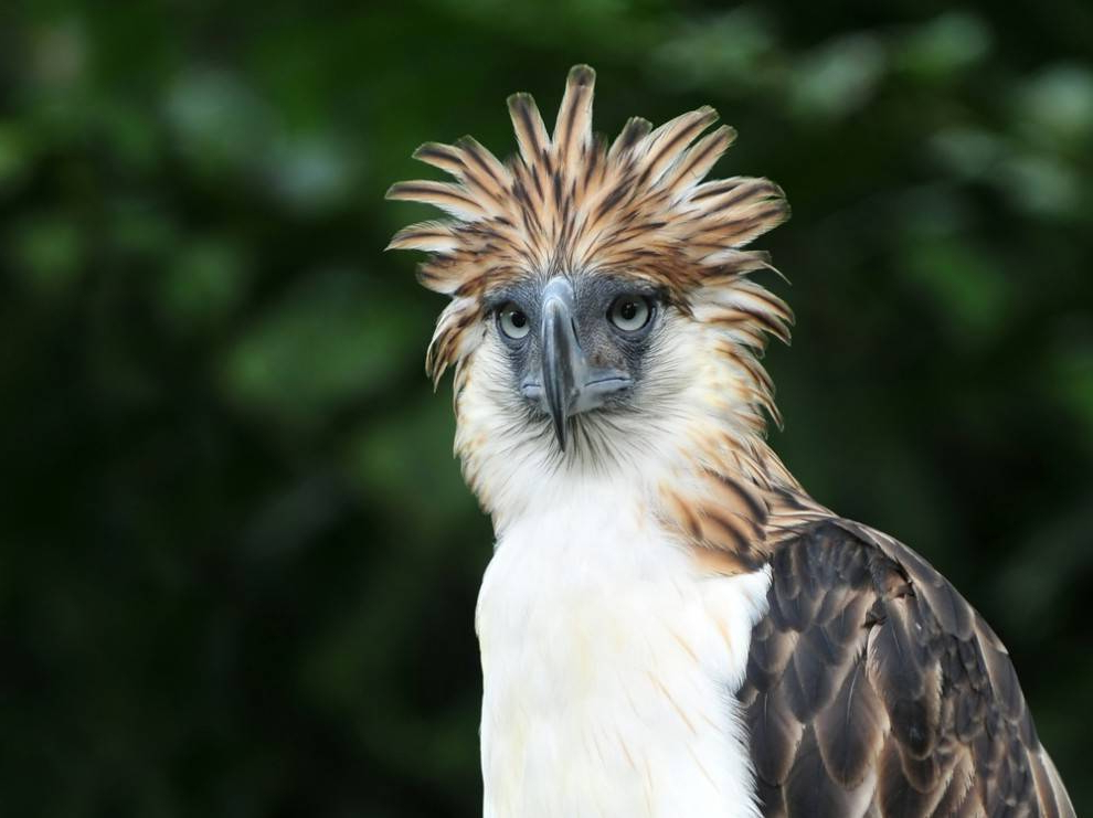 15 Birds With Snazzier Hairdos Than You | Mnn – Mother Within Mohawk Haircuts With Curls For A Feathered Bird (View 19 of 25)